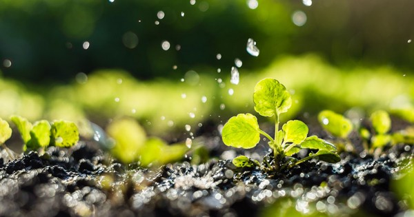 Перекись водорода в растениеводстве